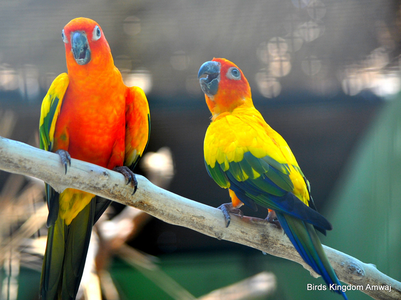 Birds at the Azizia Bird Kingdom